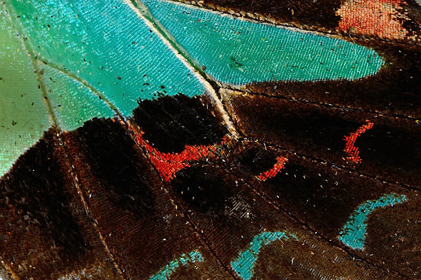 Butterfly wing picture id509759129?b=1&k=6&m=509759129&s=612x612&w=0&h=s1iffyf7sr yqtveobpgwgq9wp0zwkj8g vayy stpo=