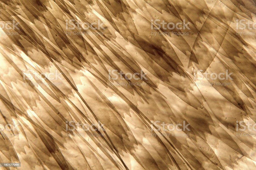 Butterfly Wing Scales royalty-free stock photo