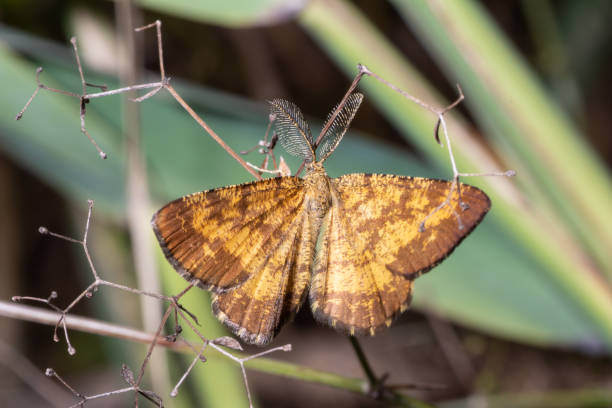 Schmetterling mit großer Antenne – Foto