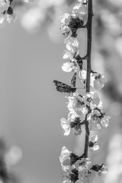 butterfly with blossoms stock photo