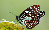 Butterfly with blurred natural background