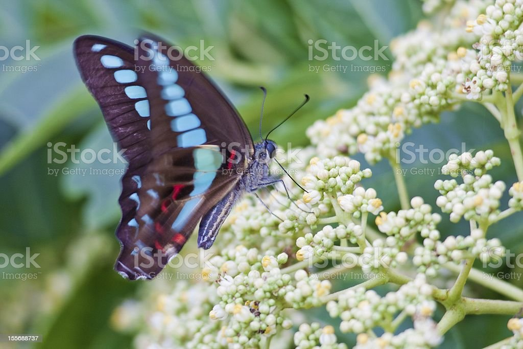 butterfly with flora royalty-free stock photo