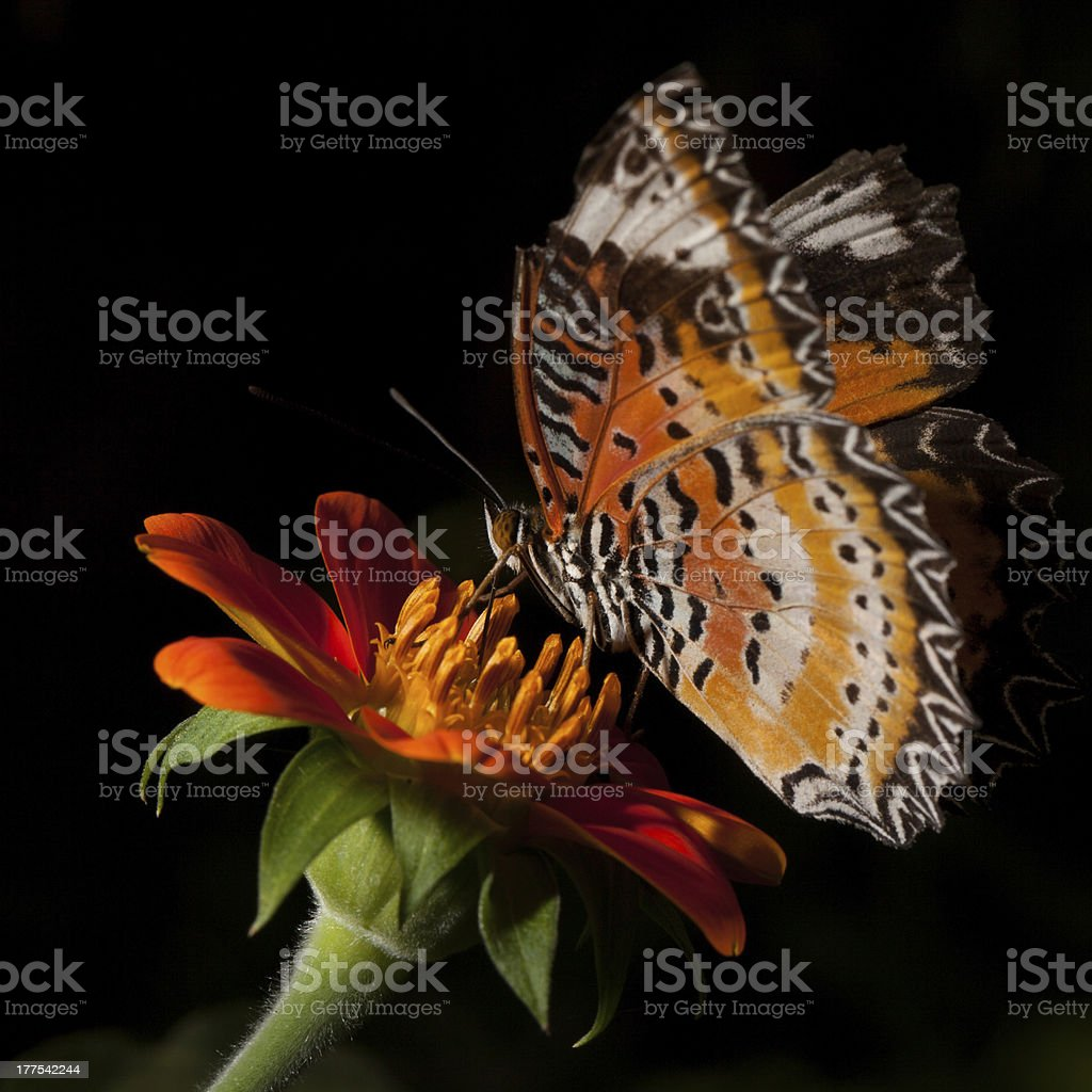 Butterfly with flower royalty-free stock photo