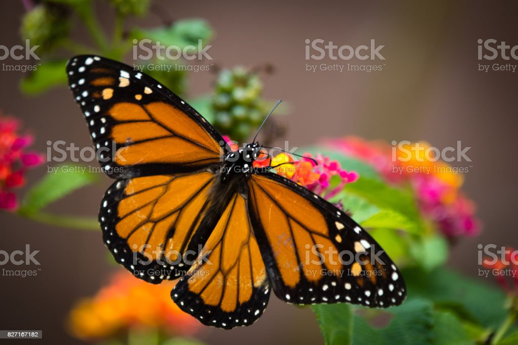Butterfly with flowers stock photo