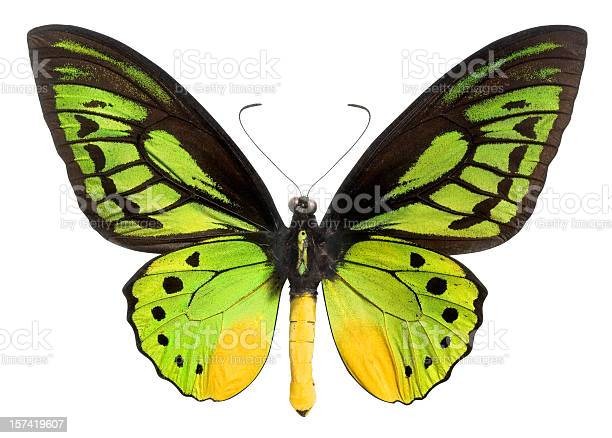 Butterfly with green black and yellow wings clipping path picture id157419607?b=1&k=6&m=157419607&s=612x612&h=mqktracy9q3wpxpbwqdxnmaqkq3h5hh0adpuvcrgz4a=