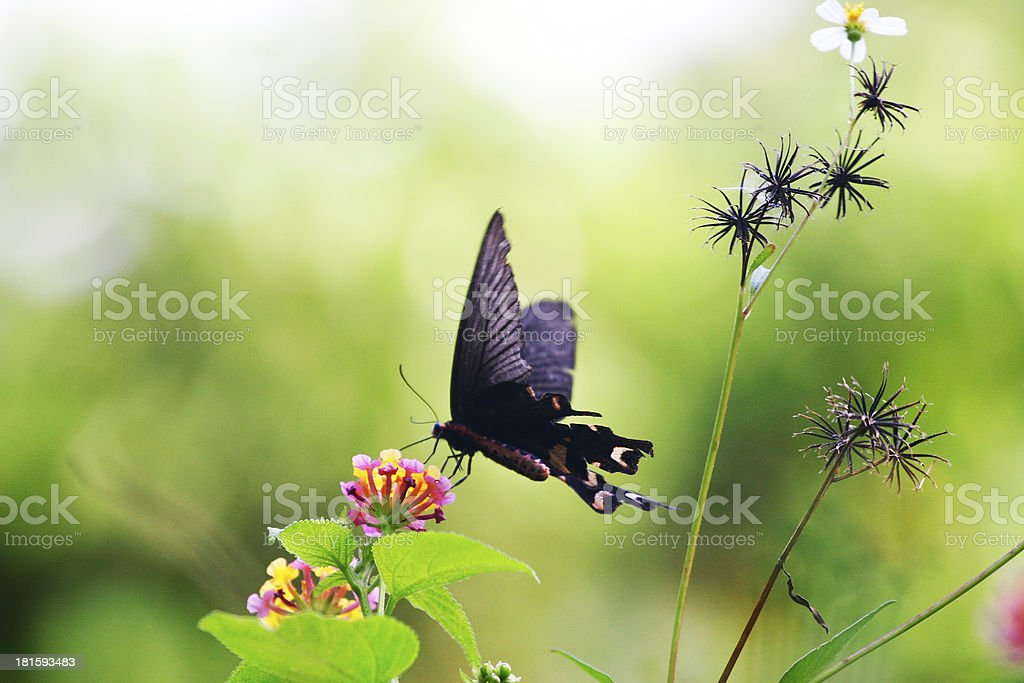 Butterfly with green leaves royalty-free stock photo