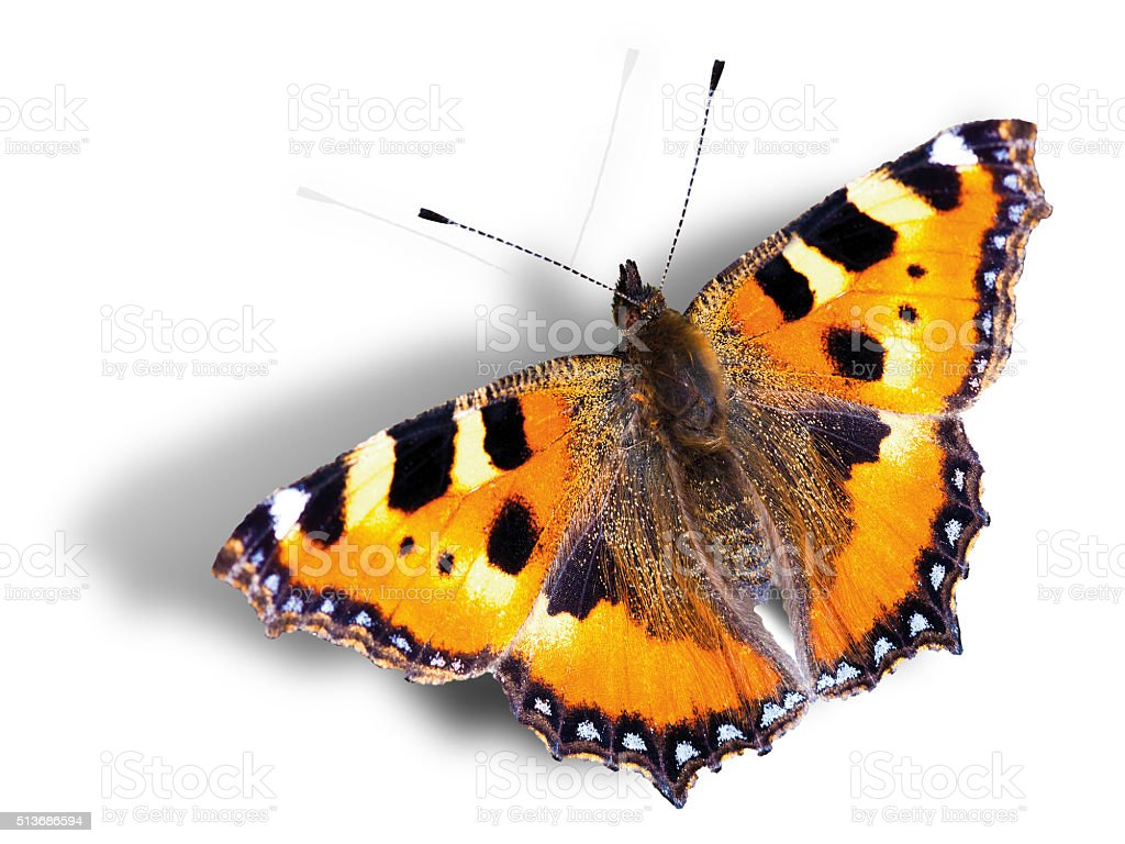 Butterfly with shadow against white background, 3D illusion stock photo