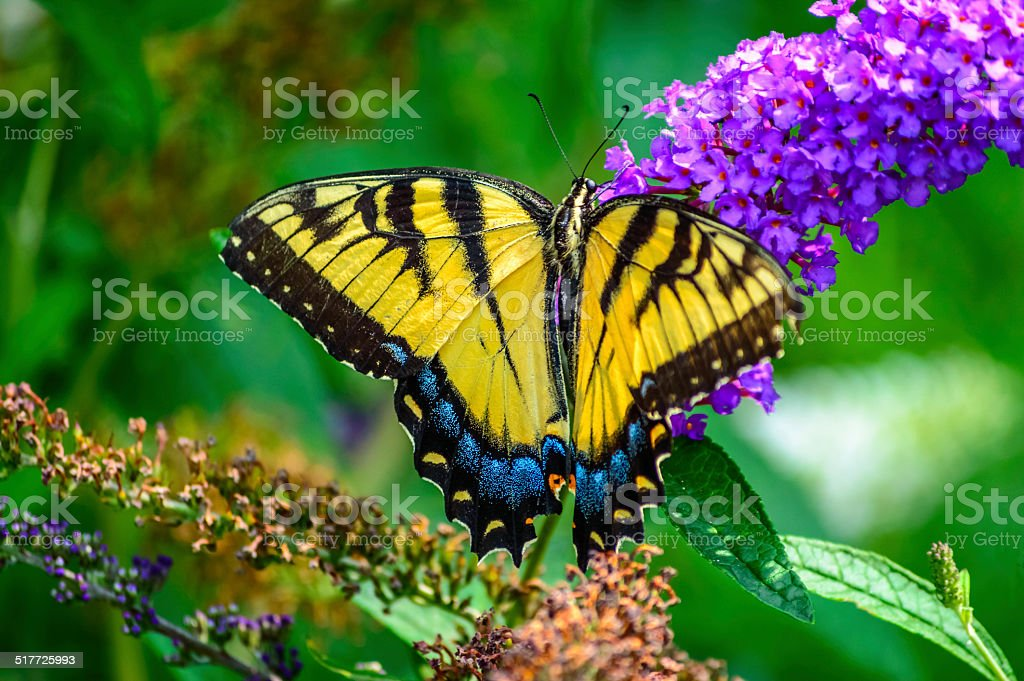 Butterfly with wings open stock photo