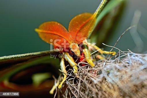 istock Butterfly World 483612966
