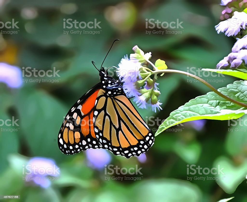 Butterfly1 stock photo