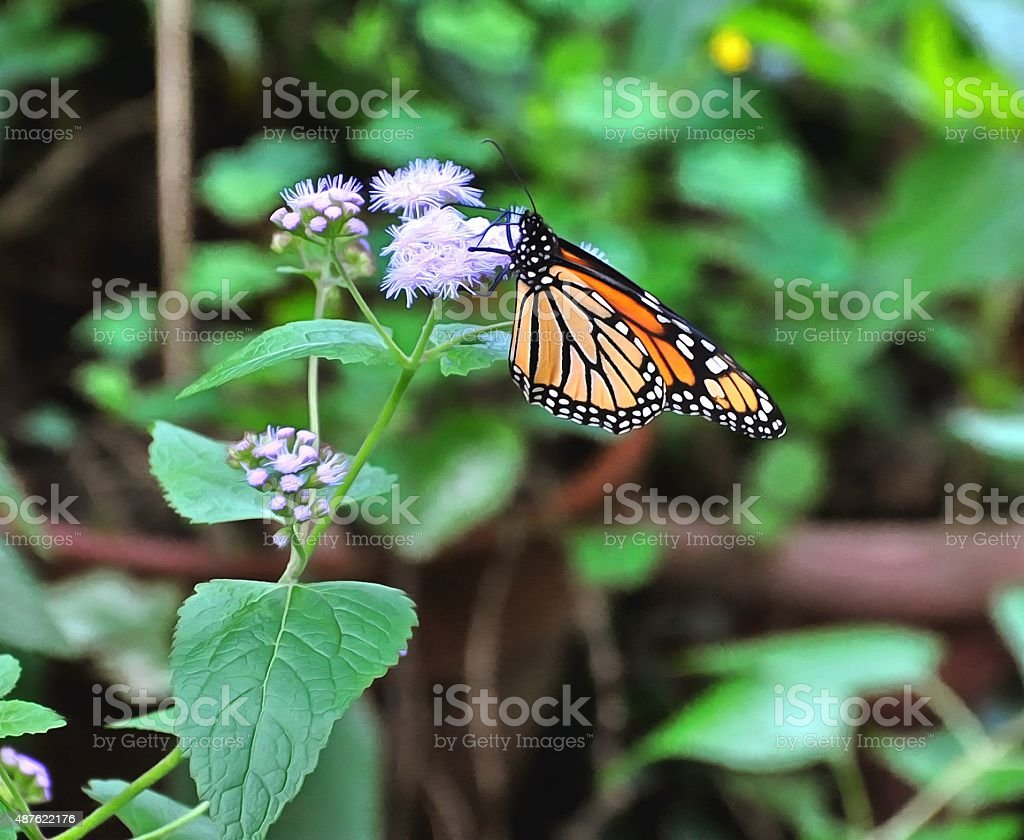 Butterfly2 stock photo