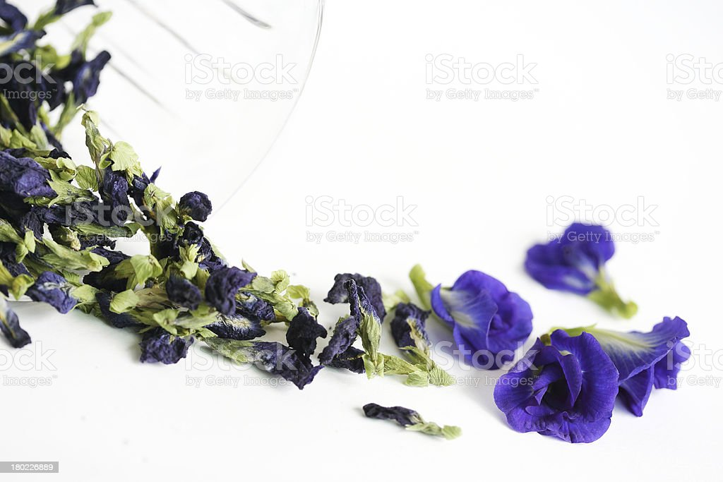 butterfly-pea or  blue - pea herb stock photo
