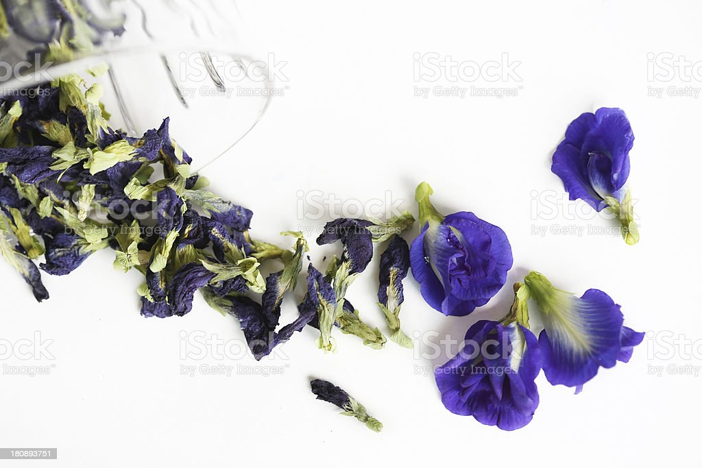 butterfly-pea or  blue - pea stock photo