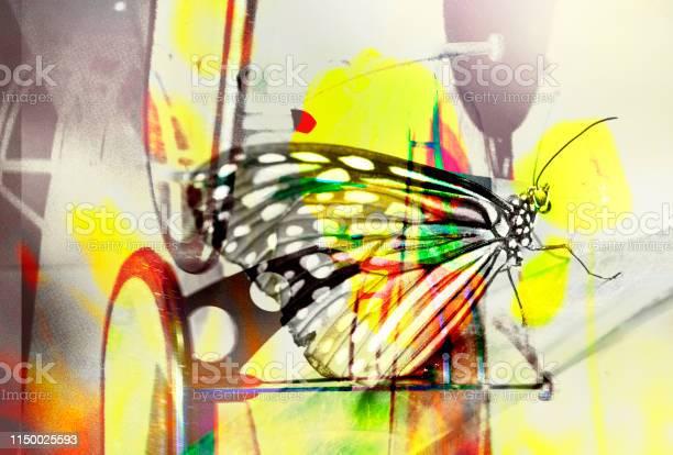 Butterflystock image picture id1150025593?b=1&k=6&m=1150025593&s=612x612&h=qha9wysnkgdpb0ifzv qcqhqdorpkkbeuf0ikuesfca=