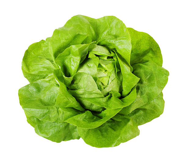 butterhead lettuce - clipping path included - lettuce stock pictures, royalty-free photos & images
