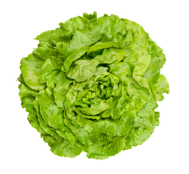 butterhead lettuce from above over white - lettuce stock photos and pictures