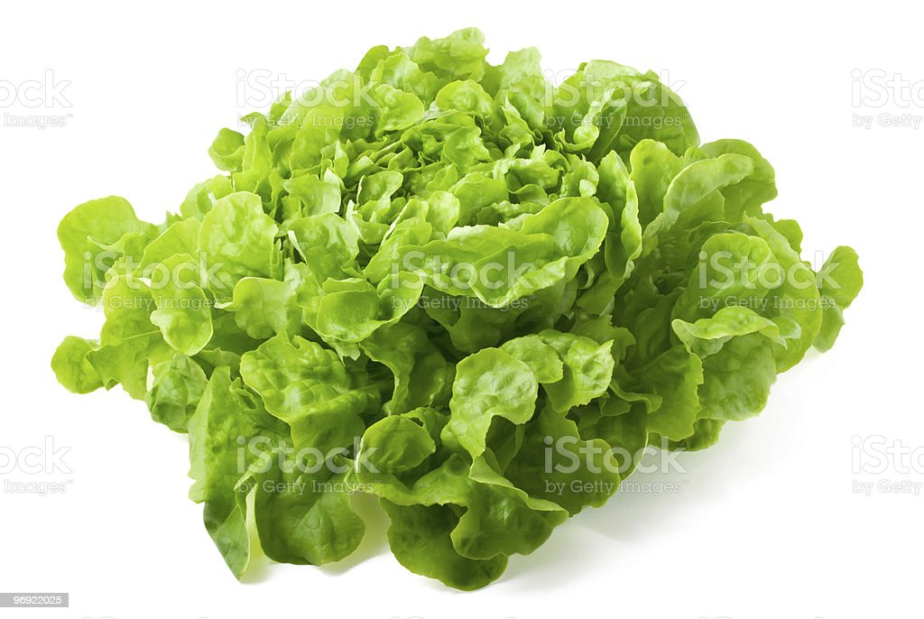 Butterhead lettuce isolated on white background royalty-free stock photo