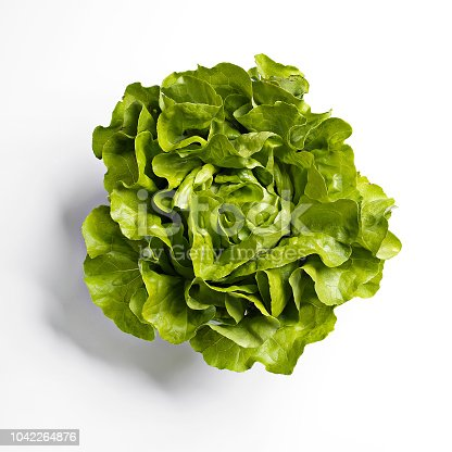 Butterhead lettuce white background