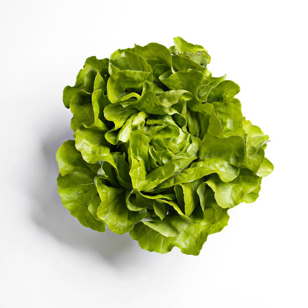 butterhead lettuce on white background - lettuce stock photos and pictures