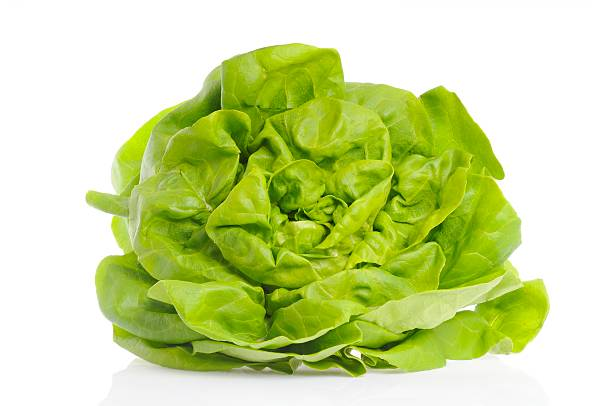 Butterhead lettuce Lettuce isolated on white. butterhead lettuce stock pictures, royalty-free photos & images