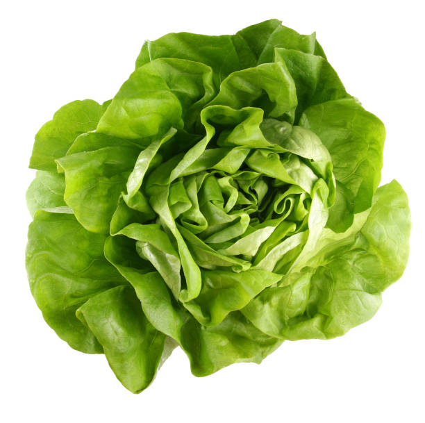 Butterhead lettuce Lettuce isolated on white with clipping path. butterhead lettuce stock pictures, royalty-free photos & images