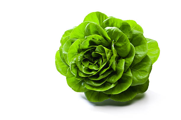 butterhead lettuce - lettuce stock photos and pictures