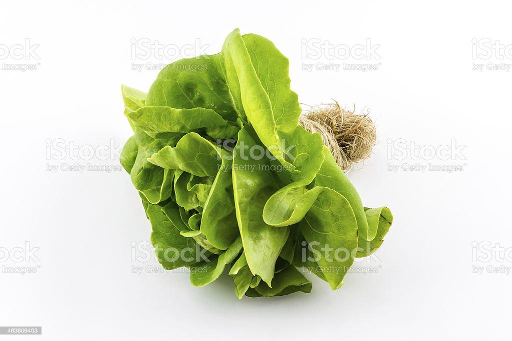 Butterhead salade. - Photo