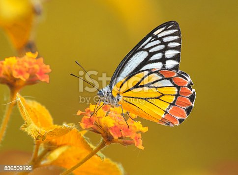 istock Butterly in Autumn 836509196