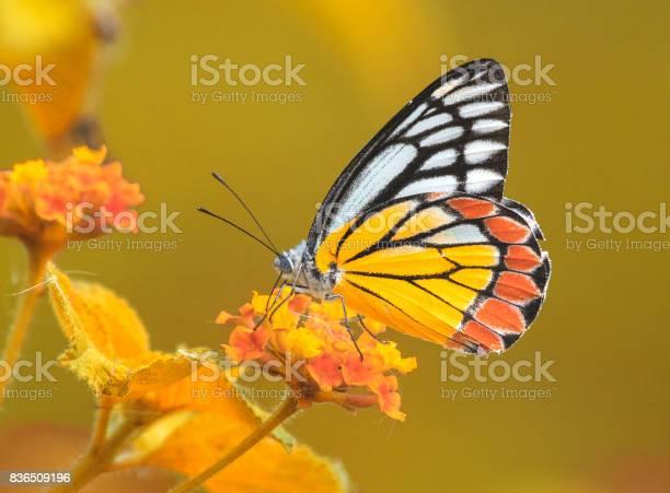 Butterly in autumn picture id836509196?b=1&k=6&m=836509196&s=612x612&h=71lfe4fhhdltrmpcgyad bvblbaakzehovmidakwc1s=