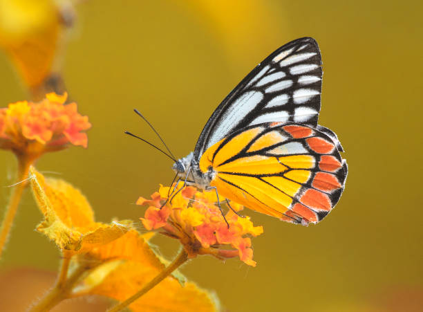 Butterly in Autumn stock photo
