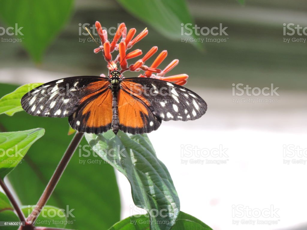 Butterly's kiss stock photo