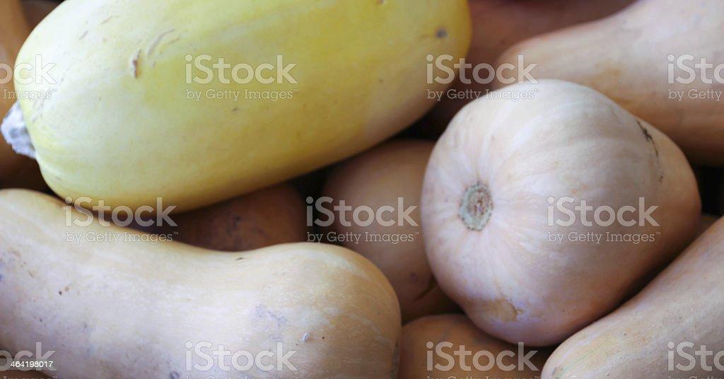 Butternut Squash royalty-free stock photo