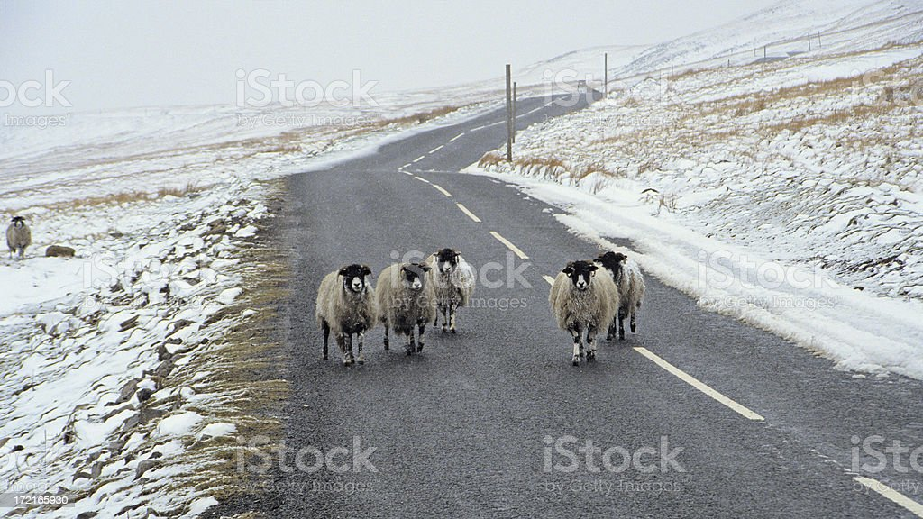 Buttertubs Pass Traffic royalty-free stock photo