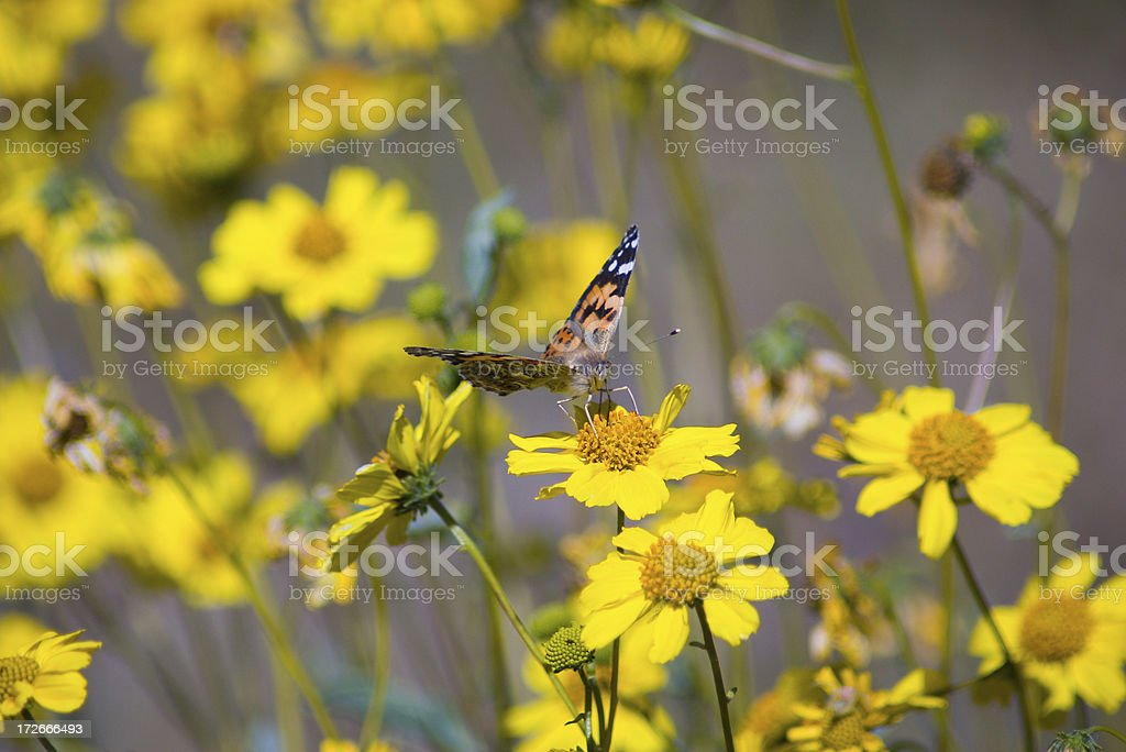 Butteryfly royalty-free stock photo