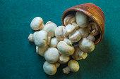 Button Mushroom / Field Mushroom
