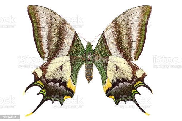 Buttrerfly on white picture id482903821?b=1&k=6&m=482903821&s=612x612&h=hx9ia4tzd0eshv5objaxswz u5wofrong7i7qb9vplm=