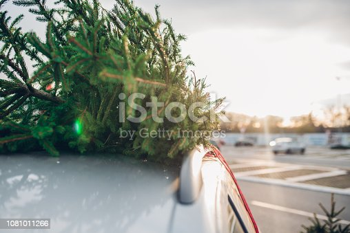 New Christmas tree tied to a car
