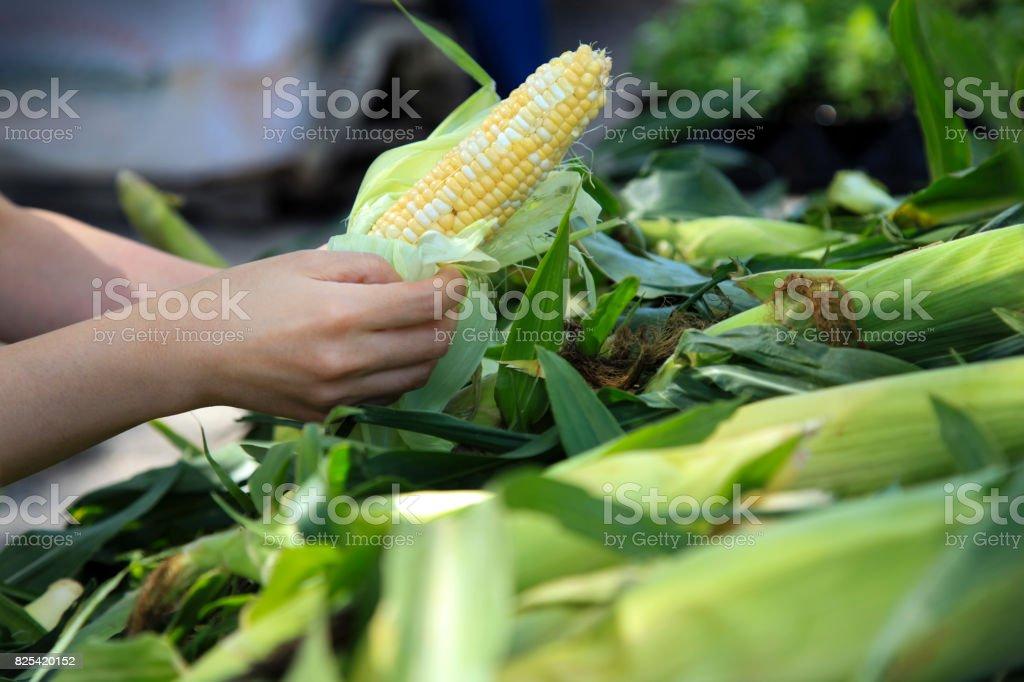 Buying Fresh Corns at Farmer's Market stock photo