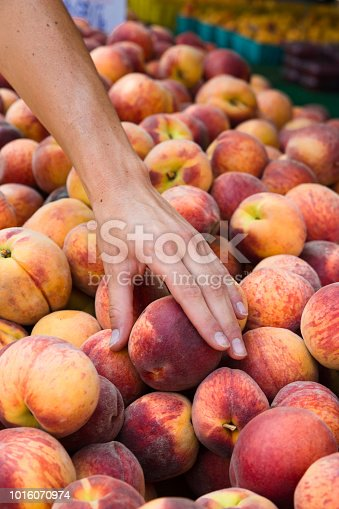 Organically grown Peaches at farmers market with woman's hand selecting