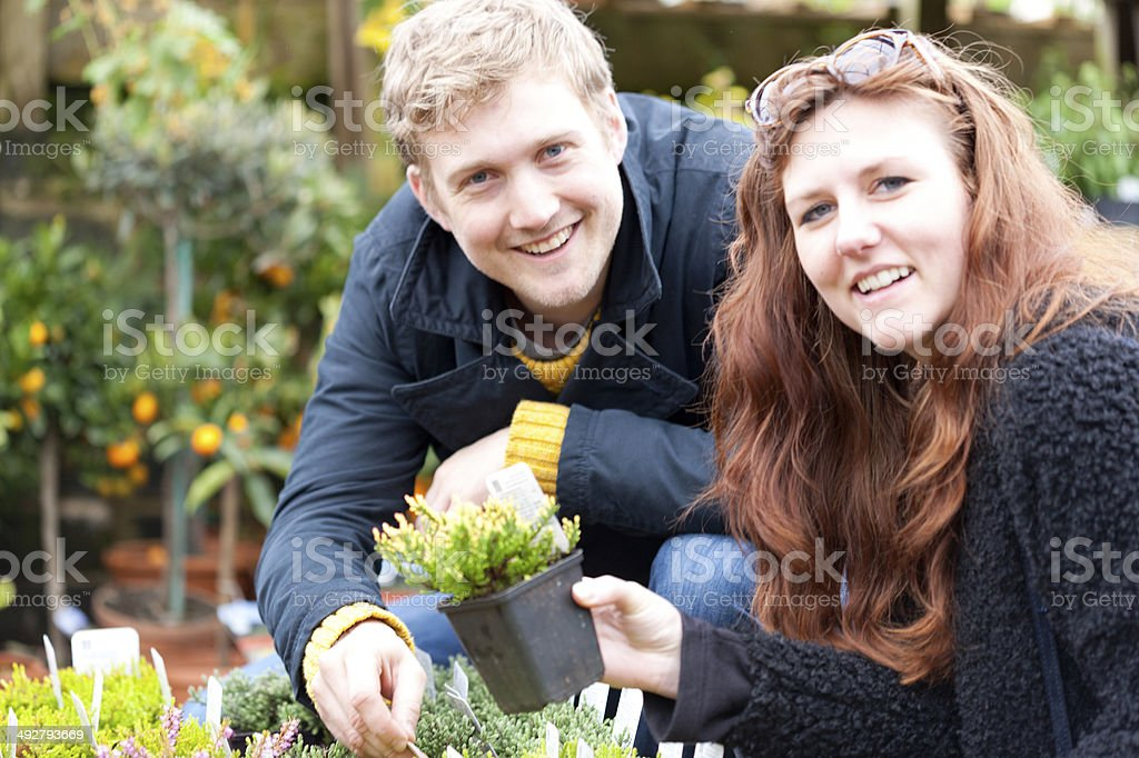 Buying shrubs stock photo