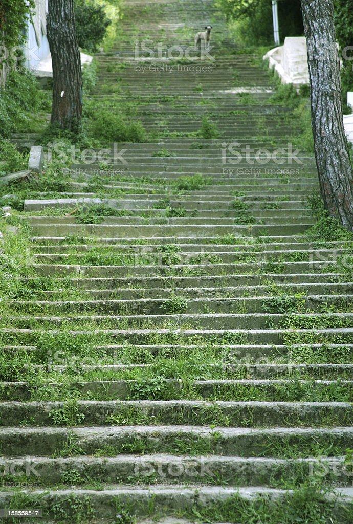 Buyukada 계단 royalty-free 스톡 사진