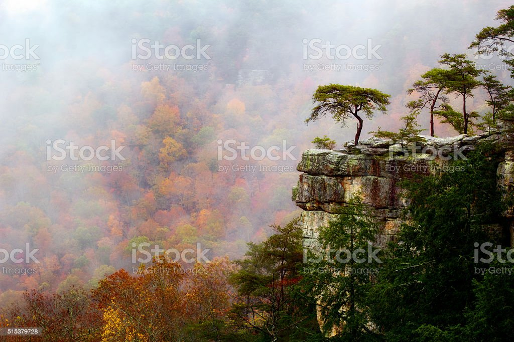 Buzzards Roost in Autumn stock photo