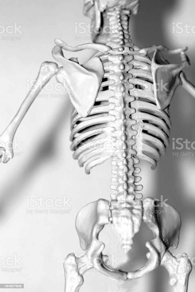 bw bones from the back royalty-free stock photo