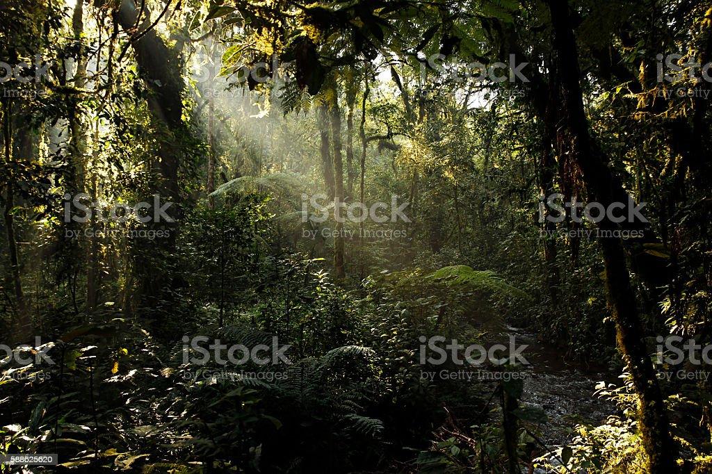Bwindi Impenetrable Forest stock photo