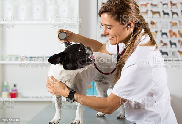 By listening to a dog veterinary bulldog french picture id486728116?b=1&k=6&m=486728116&s=612x612&h= 2huoldrk0q6r97ah1drhxxxcqevi0bfwyimfa7jg e=