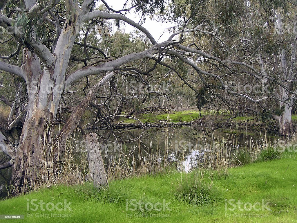 By the Waterhole royalty-free stock photo