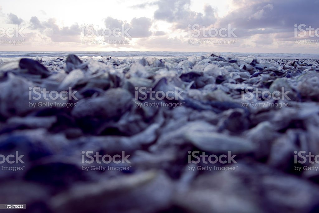 By the wind sailor - Royalty-free 2015 Stock Photo