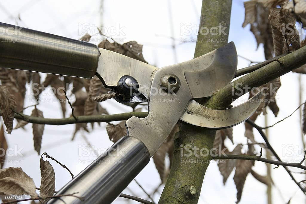 Bypass loppers royalty-free stock photo