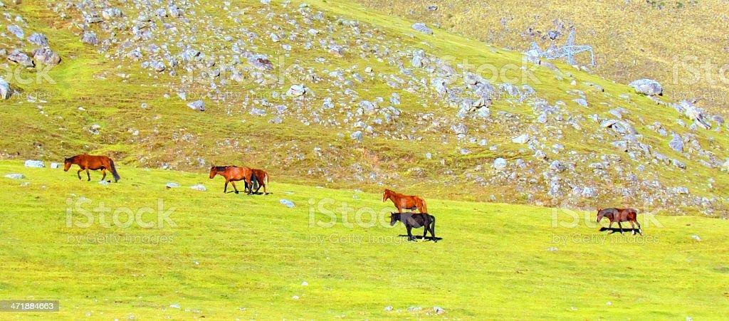 caballos en montaña royalty-free stock photo