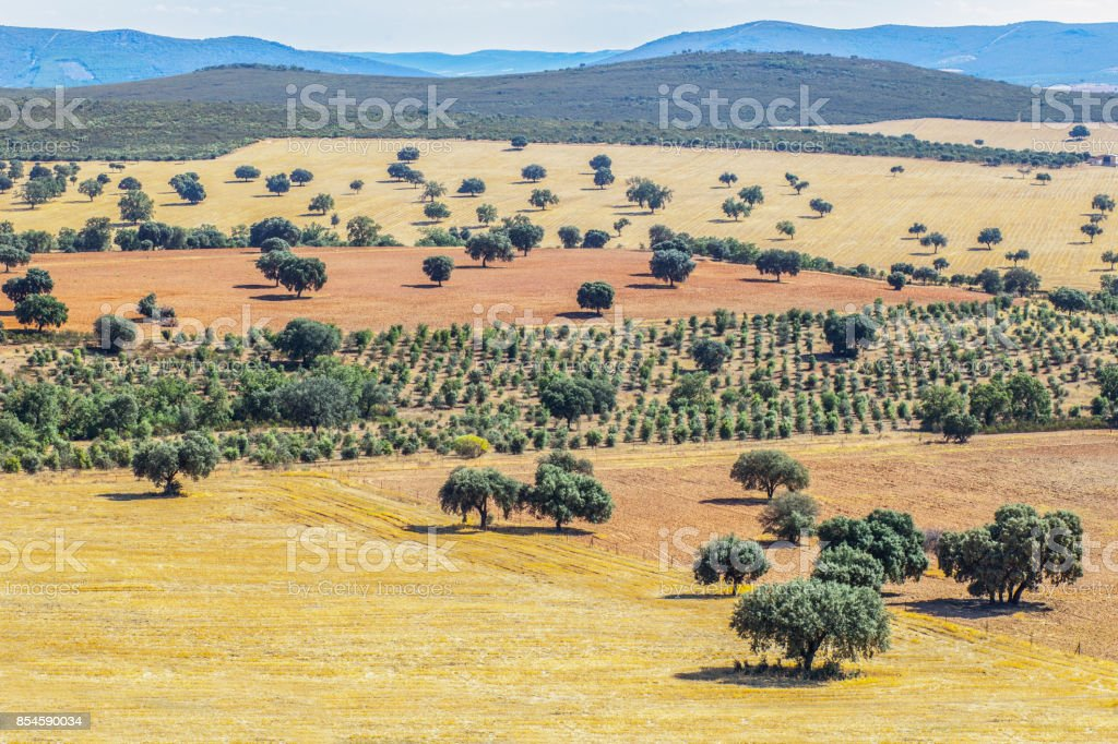 Cabaneros National Park. A dehesa, the traditional pastoral management in the park stock photo